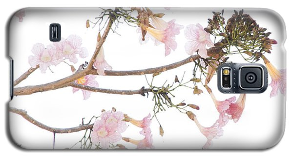 Pink Blossoms In Panama Galaxy S5 Case
