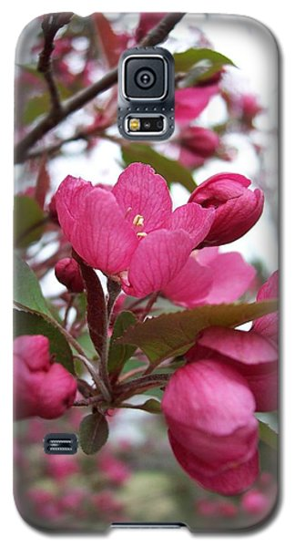 Pink Crabapple Blooms Galaxy S5 Case by Rebecca Overton