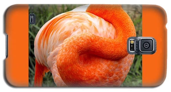 Galaxy S5 Case featuring the photograph Pink Flamingo Sleep by Rebecca Margraf