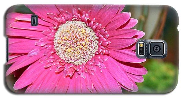 Pink Gerbera Daisy Galaxy S5 Case by Ann Murphy