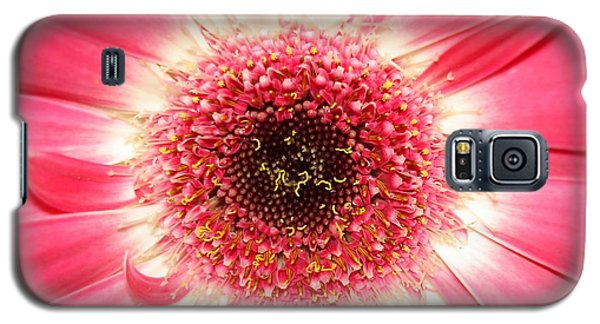 Galaxy S5 Case featuring the photograph Pink Gerbera Daisy Close-up by Kerri Mortenson