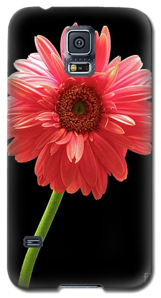 Pink Gerbera Galaxy S5 Case