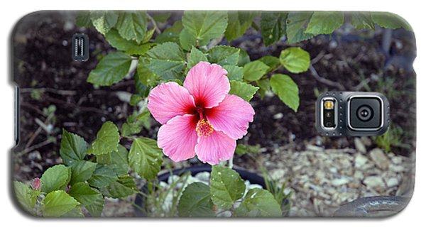 Pink Hibiscus And Wheel Galaxy S5 Case