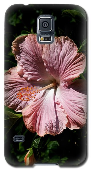 Galaxy S5 Case featuring the photograph Pink Hibiscus by Karen Harrison
