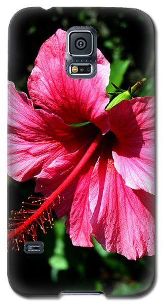 Galaxy S5 Case featuring the photograph Pink Hibiscus2 by Karen Harrison