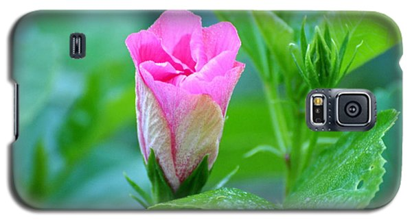 Pink Hybiscus Bud Galaxy S5 Case by Jodi Terracina