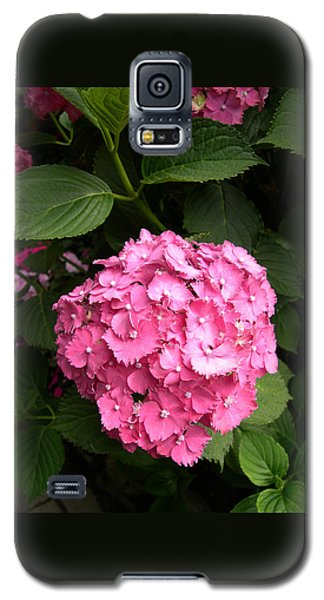Pink Hydranga Galaxy S5 Case by Claude McCoy