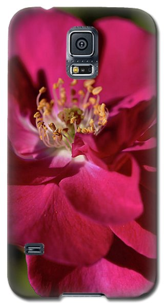 Galaxy S5 Case featuring the photograph Pink Of Rose by Joy Watson