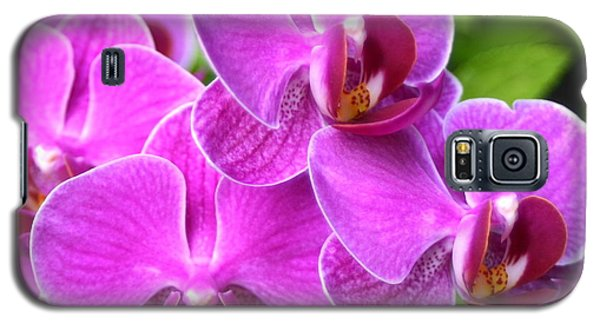 Galaxy S5 Case featuring the photograph Pink Orchids B by Cindy Lee Longhini