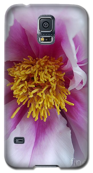 Galaxy S5 Case featuring the photograph Pink Peony by Eva Kaufman