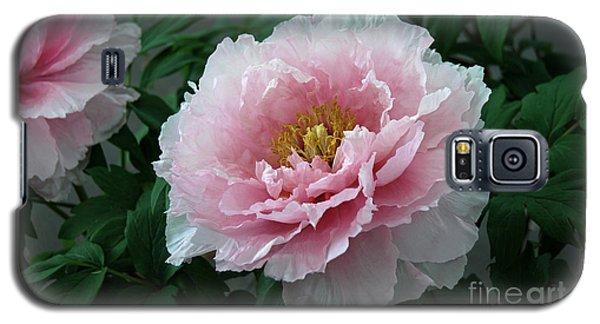 Pink Peony Flowers Series 2 Galaxy S5 Case