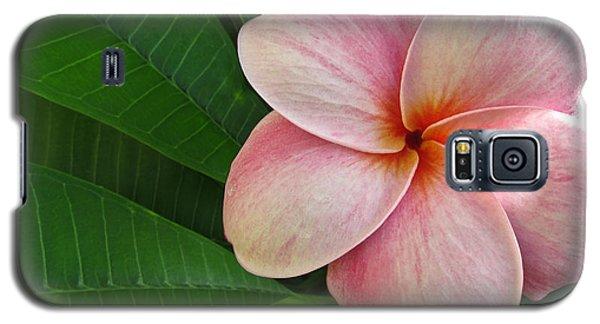 Pink Plumeria Galaxy S5 Case