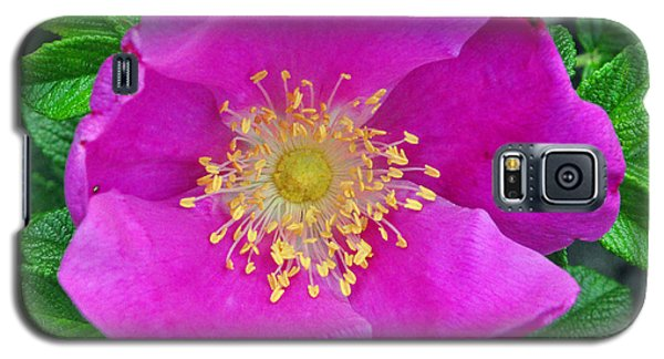 Galaxy S5 Case featuring the photograph Pink Portulaca by Tikvah's Hope