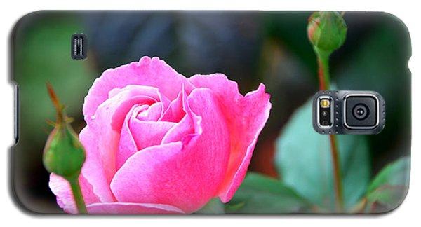 Galaxy S5 Case featuring the photograph Pink Rose by Janice Adomeit