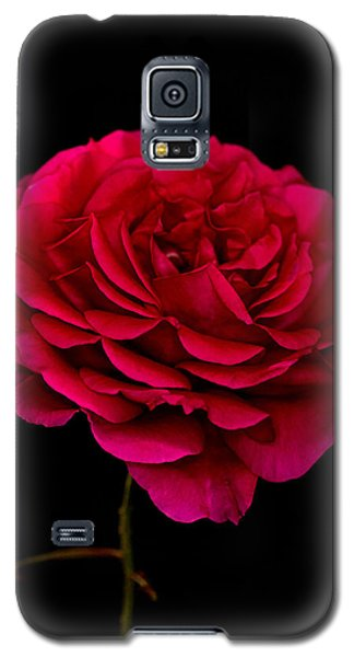Galaxy S5 Case featuring the photograph Pink Rose by Steve Purnell