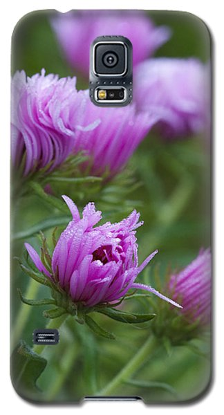 Pink Swirls Galaxy S5 Case by Carrie Cranwill