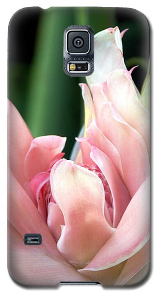 Pink Torch Ginger Galaxy S5 Case by Jocelyn Kahawai