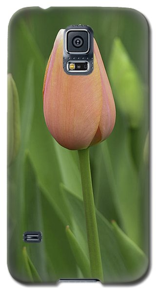 Galaxy S5 Case featuring the photograph Pink Tulip With Buds by Betty Denise