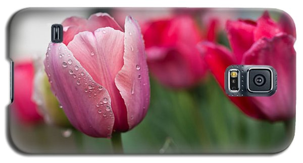 Pink Tulips With Water Drops Galaxy S5 Case