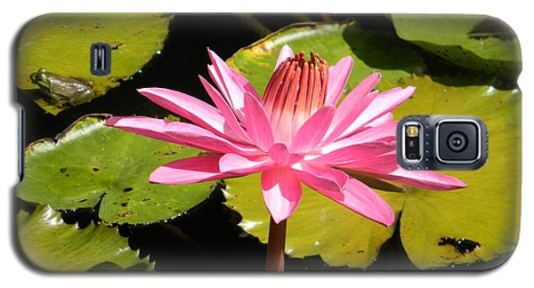 Pink Water Lilly With Frog Galaxy S5 Case