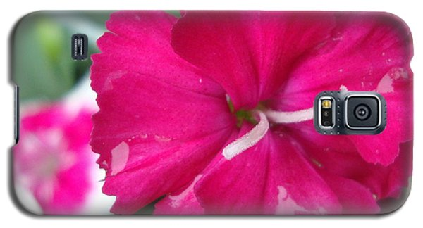 Pinky Galaxy S5 Case