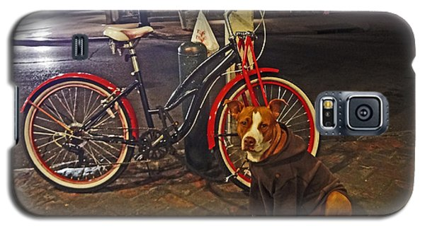 Pit Bull In A Hoodie In The French Quarter Of New Orleans Galaxy S5 Case