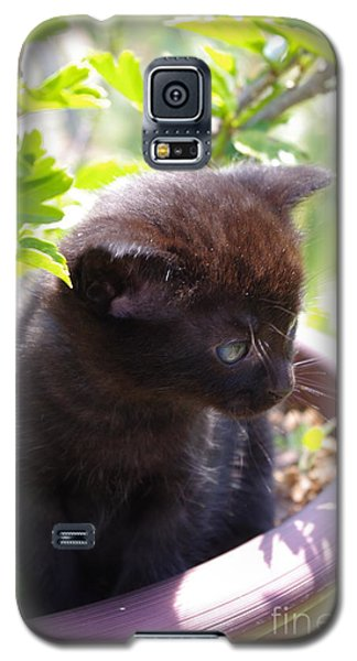 Galaxy S5 Case featuring the photograph Planted Kitten by Tannis  Baldwin