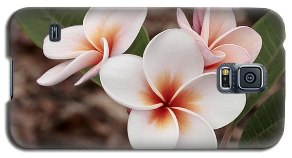 Plumeria   Kona Hawii Galaxy S5 Case by James Steele