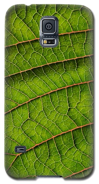 Poinsettia Leaf II Galaxy S5 Case