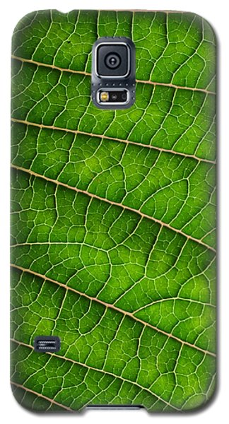 Poinsettia Leaf IIi Galaxy S5 Case