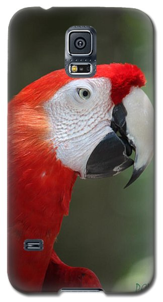 Polly Galaxy S5 Case by Patrick Witz