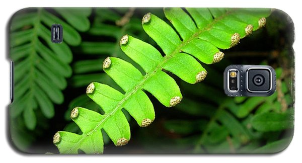 Galaxy S5 Case featuring the photograph Polypody by Judi Bagwell