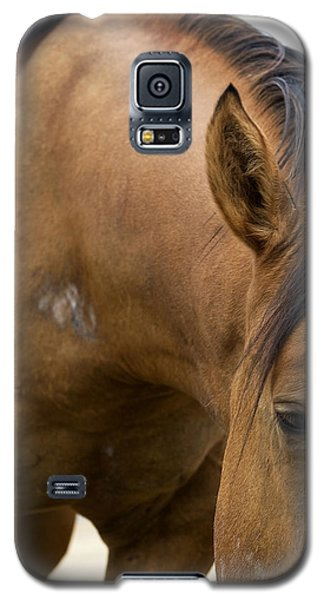 Galaxy S5 Case featuring the photograph Curious Pony by Lorraine Devon Wilke