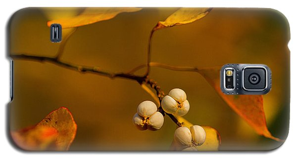 Galaxy S5 Case featuring the photograph Popcorn Tree by Dan Wells