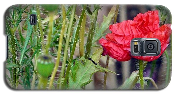 Galaxy S5 Case featuring the photograph Popped Poppy by Rdr Creative