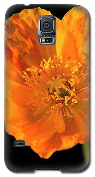 Poppy Galaxy S5 Case