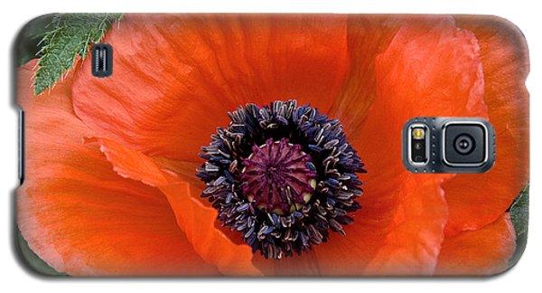 Poppy II Galaxy S5 Case by Michael Friedman
