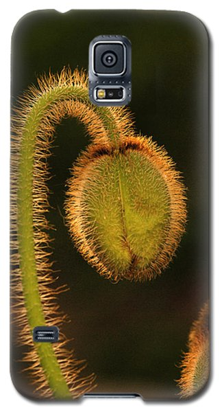 Poppy Light Galaxy S5 Case