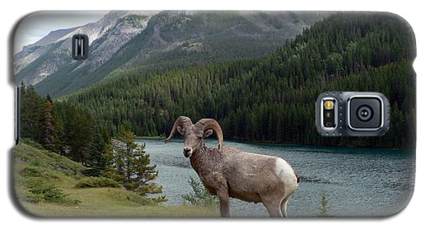 Galaxy S5 Case featuring the photograph Portrait Of A Bighorn Sheep At Lake Minnewanka  by Laurel Best
