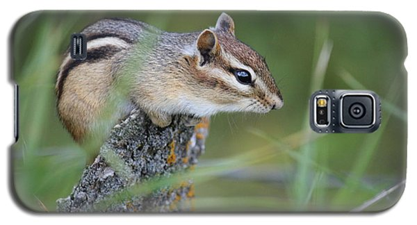 Galaxy S5 Case featuring the photograph Portrait Of A Chipmunk by Penny Meyers