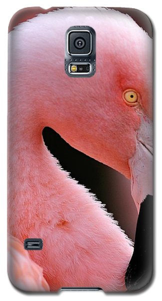 Portrait Of A Flamingo Galaxy S5 Case