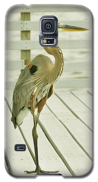 Portrait Of A Heron Galaxy S5 Case
