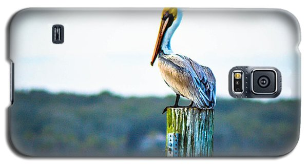 Galaxy S5 Case featuring the photograph Posing Pelican by Shannon Harrington