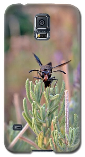 Galaxy S5 Case featuring the photograph Potter Wasp by Werner Lehmann