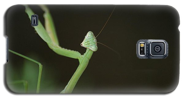 Galaxy S5 Case featuring the photograph Praying Mantis by Heidi Poulin