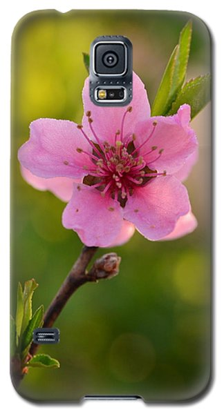 Pretty Pink Peach Galaxy S5 Case