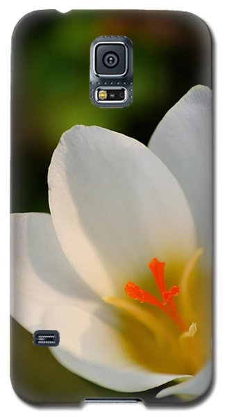 Pretty White Crocus Galaxy S5 Case by JD Grimes