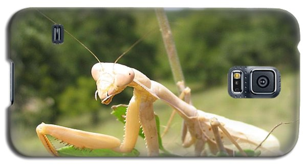 Galaxy S5 Case featuring the photograph Preying Mantis by Mark Robbins