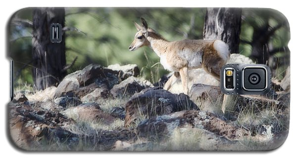 Pronghorn Antelope Fawn Galaxy S5 Case