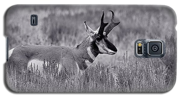Galaxy S5 Case featuring the photograph Pronghorn  by Eric Tressler